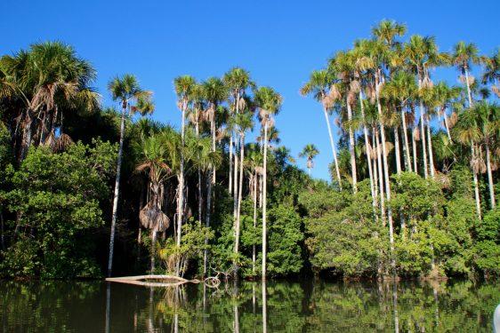 Immersion dans la jungle amazonienne