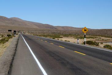 En route pour le canyon del colca - Attention Vigognes