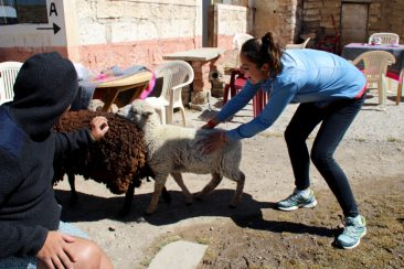 La chasse aux moutons